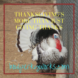 thanksgivings-more-than-just-giving-thanks3